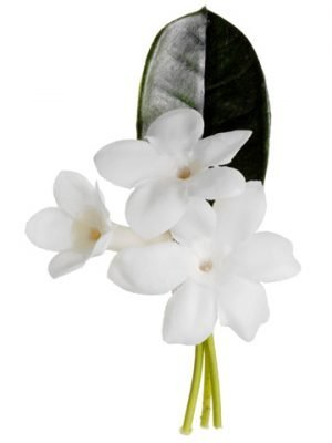 "4"" Stephanotis Boutonniere  White"
