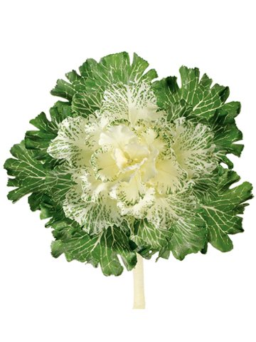 "11"" Large Japanese Cabbage Spray White"