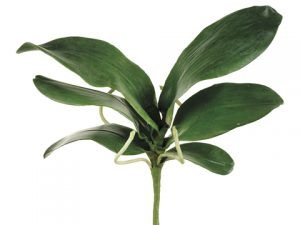 """15"""" Large Phalaenopsis OrchidLeaf Spray with 6 Leaves and4 Roots Green"""