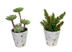 A set of 2 potted succulents