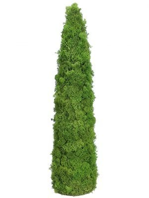 "24""H x 6""D Preserved Reindeer Moss Cone Topiary Green Gray"