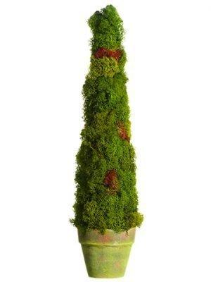 "19.5"" Preserved Moss ConeTopiary in Paper Mache PotGreen"