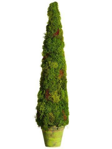 "28"" Preserved Moss ConeTopiary in Paper Mache PotGreen"