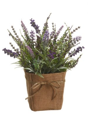 "12"" Lavender in Burlap Pot Violet"