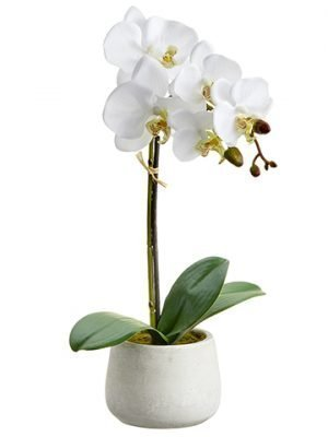 "16"" Phalaenopsis Orchid Plant With 7 Flowers And 3 Buds in Cement Pot White"