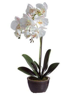 "20"" Phalaenopsis Orchid Plant in Ceramic Pot White"