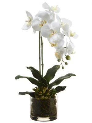 "20"" Phalaenopsis Orchid Plant/Echeveria in Glass Vase White Yellow"