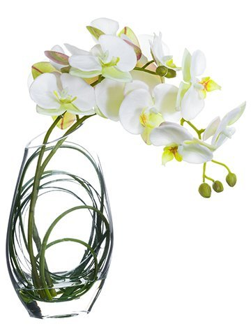 "11"" Phalaenopsis Orchid in Glass Vase White"
