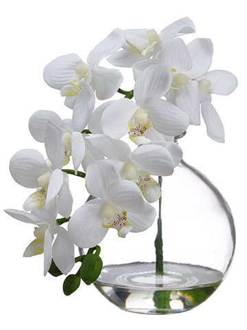 "10"" Phalaenopsis Orchid in Glass Vase Cream"