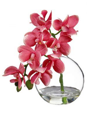 "10"" Phalaenopsis Orchid in Glass Vase Pink"