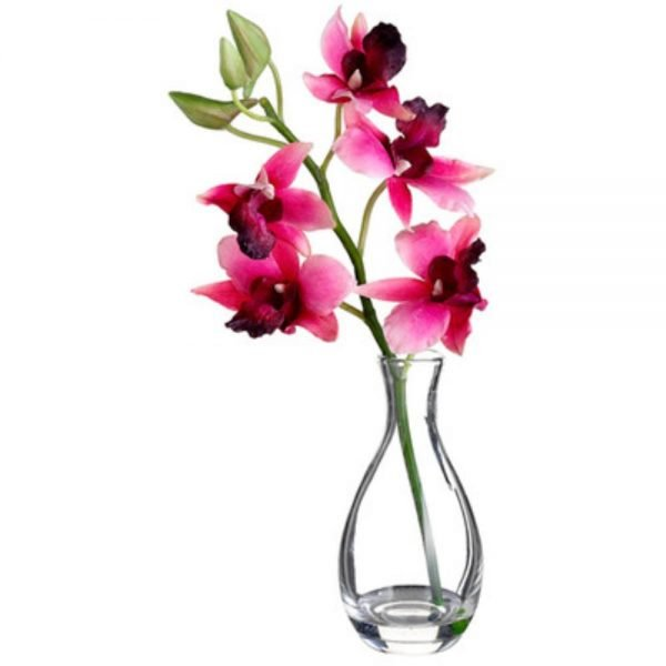 10in  Vanda Orchid in Glass Vase