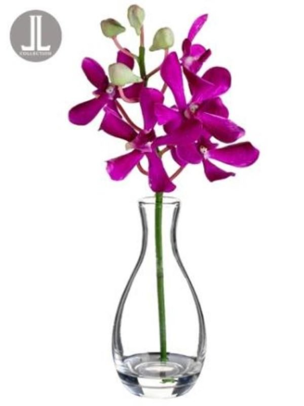 12in  Spider Vanda in Glass Vase Orchid