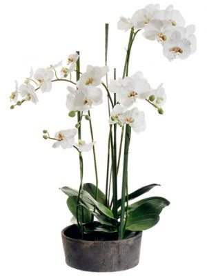 "37"" Phalaenopsis Orchid Plantin Clay PotCream Green"