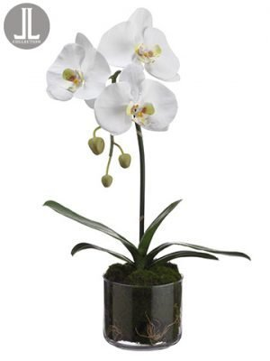 "19"" Phalaenopsis Orchid Plant in Glass Vase White"