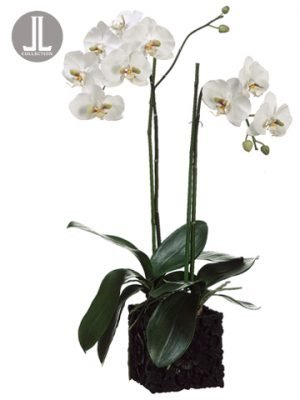 """31"""" Phalaenopsis Orchid Plantin Polyresin ContainerWhite Green"""
