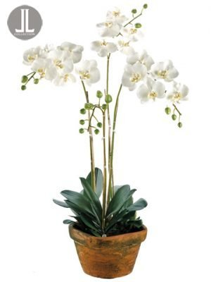 """36""""H x 10""""W x 10""""L PhalaenopsisOrchid in Terra CottaContainer White"""