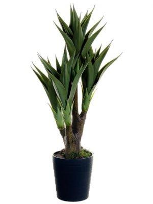 """39"""" Agave Attenuata Plant x4in Black Plastic PotGreen"""