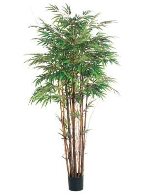 5' Natural Trunk Bamboo Tree x12 with 1840 Leaves in Pot Two Tone Green