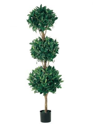 5' Triple Ball Sweet Bay Topiary in Pot