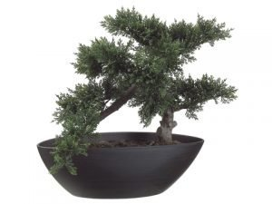 "14"" Cedar Bonsai with 197 Leaves in Plastic Pot Green"