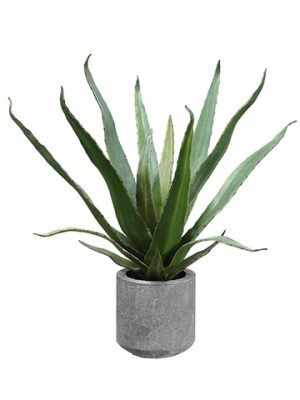 "19"" Agave in Cement Pot Green"