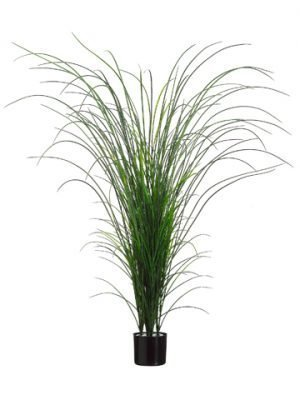 "64"" Grass Bush in Black Plastic Pot Two Tone Green"