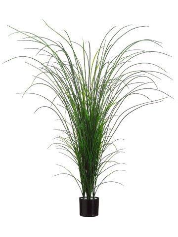 """64"""" Grass Bush in BlackPlastic PotTwo Tone Green"""
