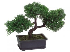 "9"" Cedar Bonsai with 113Leaves in Rectangular BrownPot Green"