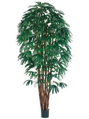 8' Rhapis Tree x7 with 1400 Leaves in Pot Two Tone Green