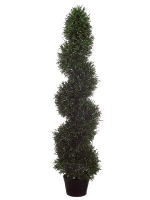 4' Rosemary Spiral Topiary in Plastic Pot Green