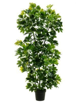 "56"" EVA Schefflera in Black Plastic Pot Green"