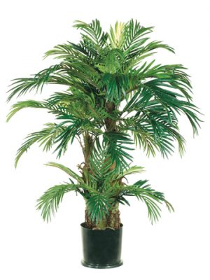 4' Phoenix Palm Tree in Round Pot Green