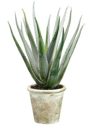 "20"" Agave in Paper Mache Pot Green Gray"