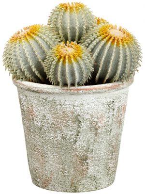 """9"""" Barrel Cactus in PaperMache PotGreen"""