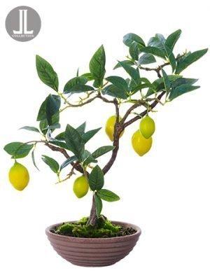 "17"" Lemon Bonsai in Clay Pot Yellow Green"