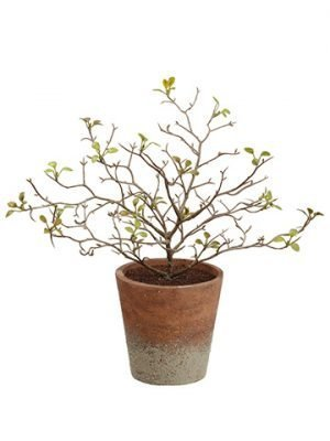 "10"" Corokia Leaf Plant inPaper Mache PotGreen"