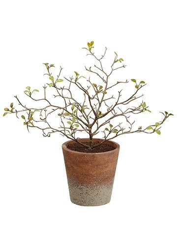 "10"" Corokia Leaf Plant in Paper Mache Pot Green"