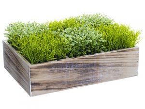 "4.5"" Grass/Tea Leaf in WoodBoxTwo Tone Green"