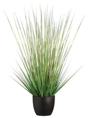 "41"" Grass/Horse Tail Bush in Pot Green"