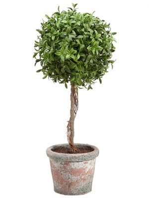 "18"" Tea Leaf Ball Topiary inTerra CottaGreen"