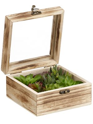 "3.1""H x 5.9""W x 5.9""L Succulent Garden in Wood Box Green Gray"