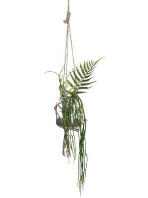"""12"""" Hanging Succulent Gardenin Glass VaseGreen"""