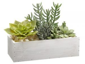 """10"""" Succulent Garden in WoodContainerGreen"""