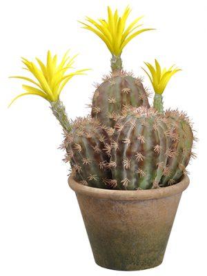"14.5"" Flowering Column Cactusin Paper Mache PotGreen Yellow"