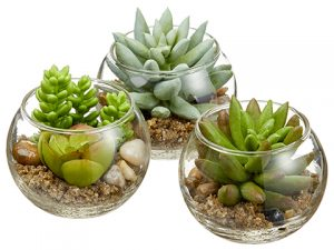 "3"" Mini Succulent in Glass Vase (3 ea/set) Two Tone Green"
