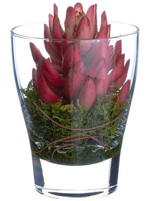 "5.5"" Echeveria in Glass Vase Brick"