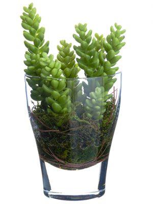 "7"" Sedum in Glass Vase Green"