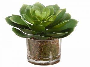 "6"" Echeveria in Glass Vase Green"