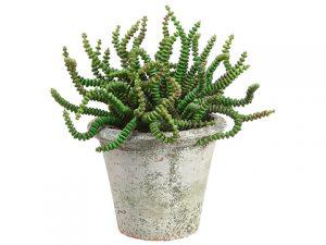 "6.5"" Worm Succulent in ClayPotGreen"