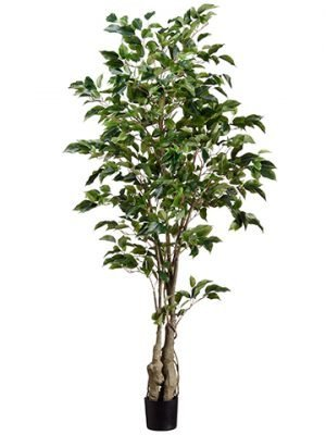 5' Ficus Tree w/859 Lvs. in Plastic Pot Green